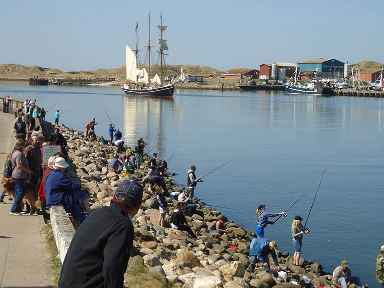 Aktiviteter - Sildefestival i Hvide Sande